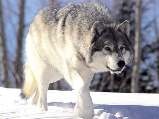 Wolf board refuses to answer lawmaker's question