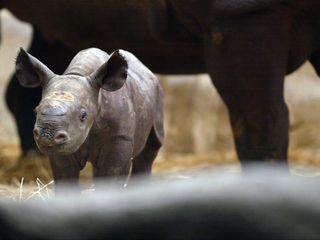 Animal populations on track for huge decline