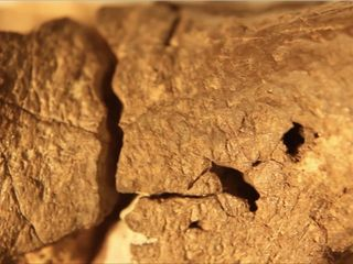 Scientists find possible dinosaur brain fossil