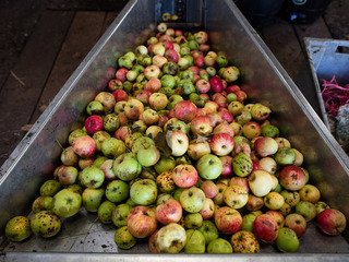 This state has at least 10 great cider mills