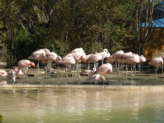 Kids break into a zoo, stone a flamingo to death