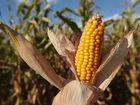 5 ways to prepare corn on the cob