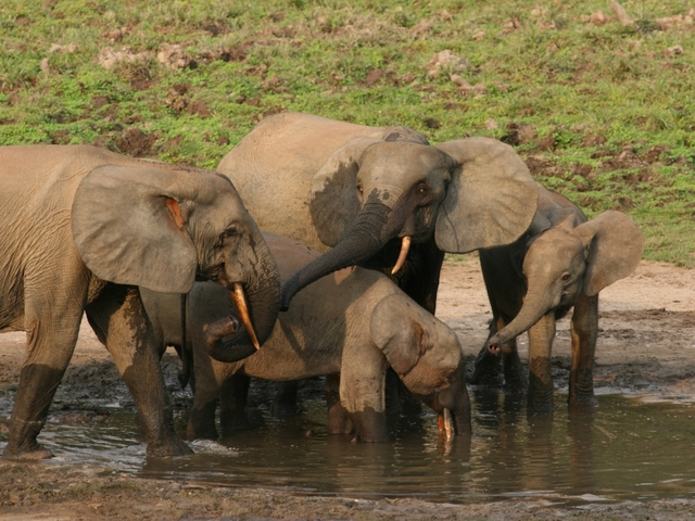 USA  to lift ban on elephant hunting trophy imports