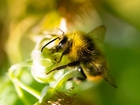 Citizen scientists helping experts research bees