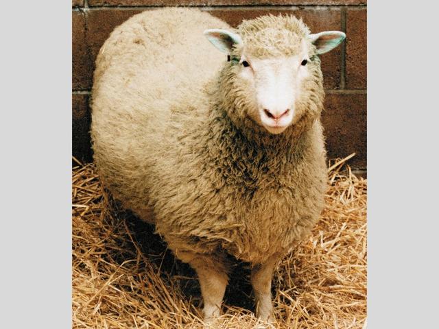 Sheep in the foothills are baaaaack