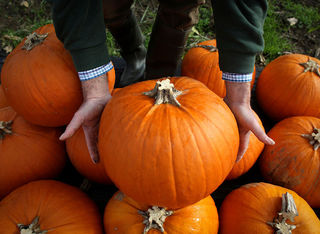 How to preserve pumpkins until Halloween