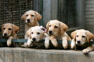 Upset customers still wait for puppy socks gifts