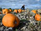 40 deals to celebrate National Pumpkin Day