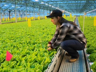 Company grows safer, longer-lasting lettuce